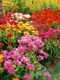 Fleurs colorées de joie Photos libres de droits