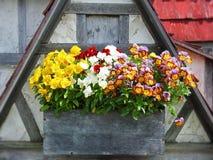Fleurs colorées de pensée photos stock