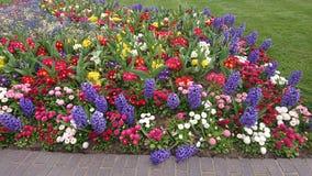 Fleurs colorées de ressort pendant la journée image libre de droits