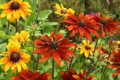 Fleurs colorées de Rubika Photo libre de droits