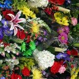 Fleurs colorées de source Photos libres de droits