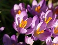 Fleurs colorées de source Images stock