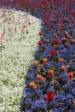 Fleurs colorées de source en stationnement Image libre de droits