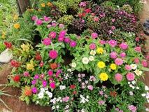 fleurs colorées de sucrerie d'oeil images stock