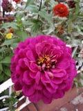Fleurs colorées de Vibrantmy swirly photos stock