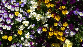 Fleurs colorées et beau fond banque de vidéos