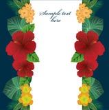 Fleurs colorées et feuilles d'été tropical Photos libres de droits