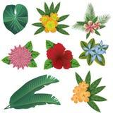 Fleurs colorées et feuilles d'été tropical réglées Photo libre de droits