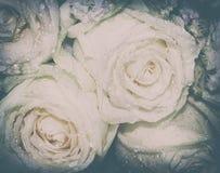 Fleurs colorées Il semble naturel et frais Ce convient Photographie stock libre de droits