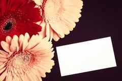 Fleurs colorées lumineuses de gerbera et carte de papier blanc Images stock