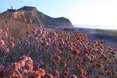 Fleurs colorées par la mer Photo libre de droits
