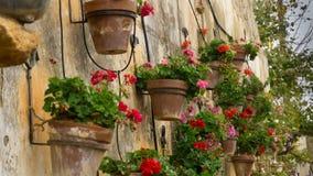 Fleurs colorées rayant un mur en pierre médiéval Photo libre de droits