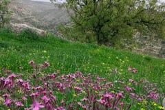 Fleurs colorées sauvages photo stock