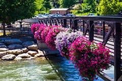 Fleurs colorées sur le pont de marche au-dessus de la rivière Truckee Image stock