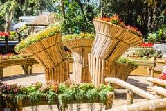 Fleurs colorées sur les grands paniers en bambou chez Mae Fah Luang Garden, Chiang Rai, Thaïlande Jardin des fleurs froides d'hiv Image libre de droits