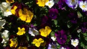 Fleurs color?es et beau fond banque de vidéos