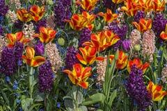 Fleurs colorées de source Photo stock