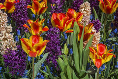 Fleurs colorées de source Photographie stock