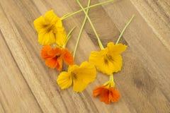 Fleurs comestibles de nasturce Images libres de droits