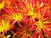 Fleurs commémoratives au cimetière pour honorer et se rappeler nos aimés Image libre de droits