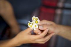 Fleurs comme cadeau Photographie stock
