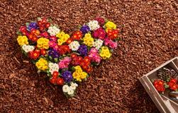 Fleurs comme forme de coeur avec des outils de jardinage Photographie stock libre de droits