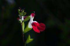 fleurs comme un oiseau Image libre de droits
