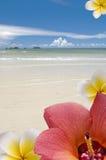 Fleurs contre la mer Image libre de droits