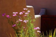 Fleurs contre le mur de patio Images stock