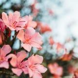 Fleurs contre le plan rapproché de ciel Photos stock