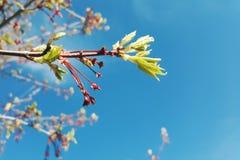 Fleurs contre un beau ciel d'été Photos stock