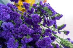 Fleurs coupées sylvatica-fraîches de Myosotis Photographie stock libre de droits