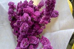 Fleurs coupées sylvatica-fraîches de Myosotis Images stock