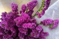 Fleurs coupées sylvatica-fraîches de Myosotis Photos stock