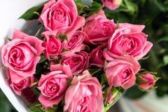 Fleurs coupées Thunb-fraîches de rugosa de Rosa Photo libre de droits