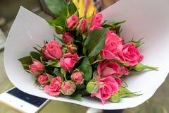 Fleurs coupées Thunb-fraîches de rugosa de Rosa Photographie stock libre de droits