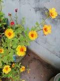 Fleurs couvrantes images stock