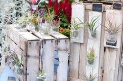 Fleurs créatives de pièce dans des pots Photos libres de droits