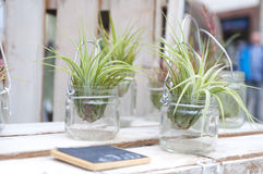Fleurs créatives de pièce dans des pots Image stock