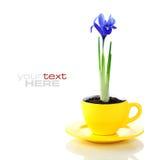 Fleurs croissantes d'iris dans une cuvette images stock