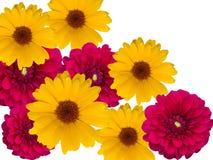 Fleurs, décoratives image libre de droits