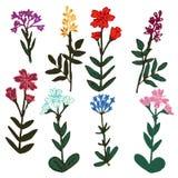 Fleurs décoratives réglées Photos stock
