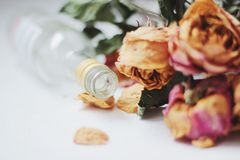 Fleurs défraîchies Images libres de droits