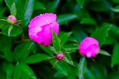 Fleurs délicieuses Images stock