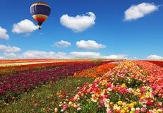 Fleurs développées pour l'exportation image libre de droits