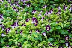 fleurs d'ฺBlurs photos libres de droits