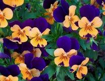 Fleurs d'été photo libre de droits