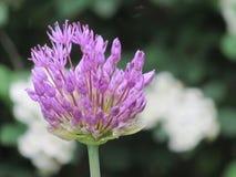 Fleurs d'été photographie stock libre de droits