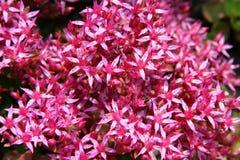 Fleurs d'été. Image stock