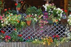 Fleurs d'été image stock
